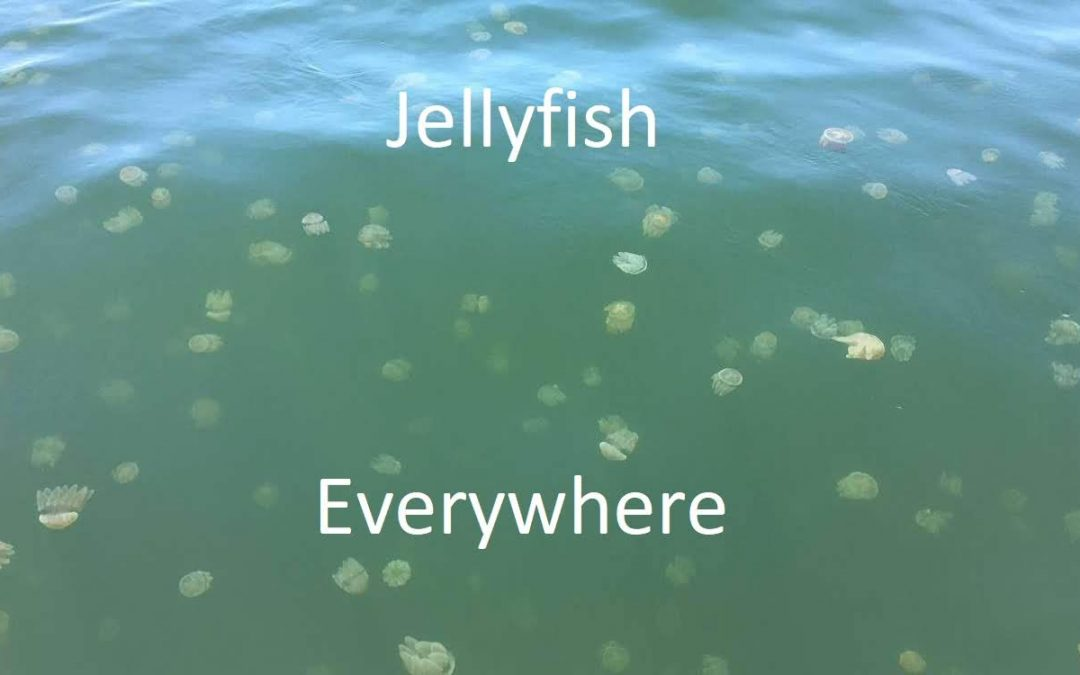 What's with allthese Jelly Blubbers