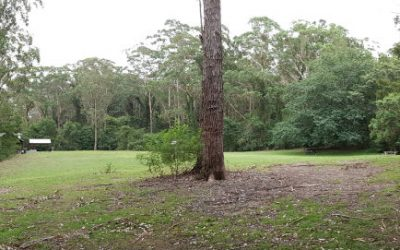 Bangalee Reserve, the perfect picnic spot